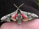 Глаза и крылья бабочки
