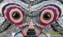 Лицо на крыльях бабочки
