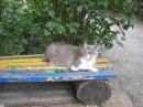 Солидный котяра...