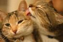 коты муркоты))