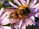 Сбор мёда 23 сентября.