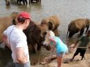 слоновий питомник Пиннавелла