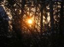 Рассвет на опушке леса
