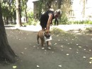 с дамской сумкой на шее - мой пёс!