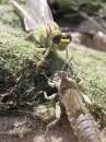 Точнее перерождение личинки в стрекозу. www.rooom.com.ua