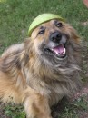 Шлем из арбузной корки для Каштана www.rooom.com.ua
