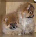 Кнопа и Розочка