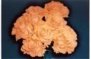 мой букет солнечных роз