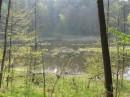 Домик семейства бобровых