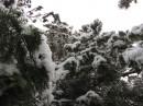 Сніг!