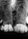 Paws. Автор: ExtraoridnaryGirl