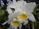 Орхидеи.Запах просто головокружителен
