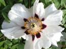 Цветок)