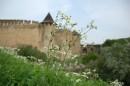 Полевые цветы у склона Хотинской крепости