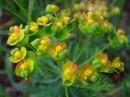 Цветение трав Феофании