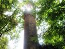 Перша водонапірна башта зрошувальної системи  дендропарка Аськанії-нова  виконана у вигляді  середньовічного замку.Збудована в1898 році, діюча Площа дендропарка Асканії-нова  складає близько 200 га. Він розбитий згідно строгому плану, що сумістив стилі природних англійських і  регулярних французьких парків.