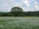 Долина Нарциссов - заповедный массив, входящий в состав Карпатского биосферного заповедника, расположенный в нескольких километрах от города Хуст (Закарпатская область)