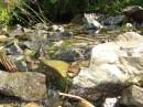 Такими ручьями подпитывается местная речушка Схиднычанка.Также в эту речку впадают воды из 10 минеральных источников Схидныци.