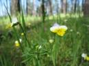 Донбасс, парк Святые горы, такое чудо еще растет в лесах