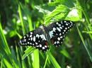 Метелик з ботанічного саду