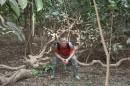Борнео. Джунгли