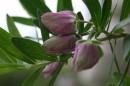 Весна Анталии