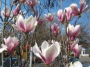 распрекраснейшие цветы