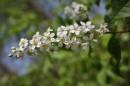 Цветение в лесу