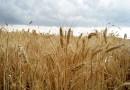 Хомутовський степ — єдина збережена ділянка різнотравно-типчаково-ковилових степів Приазов'я