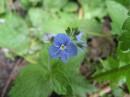 цветочек в лесу