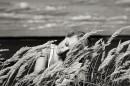 я трава...я ветер...я весна...