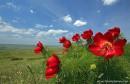 Фото сделано на плато Белой скалы, в Крыму. В мае степь цветет но очень быстро