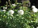 Цветение в крымском парке