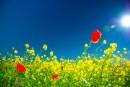 цветущее поле в солнечный день