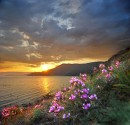 цветочный закат