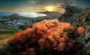 Крым, весна, цветет скумпия