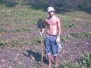 На плантациях