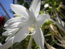 Прекрасное сочетания белого цветка на фоне голубого неба! Ето фото вызывает приятные емоцыи!