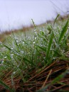 Шол весенний дождик!