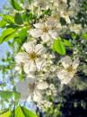 весной в парке