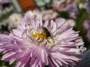 ein Blume