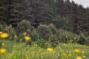 Поляна возле соснового леса, красота одним словом!!!