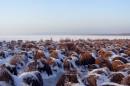 Яновское озеро, берег, зима