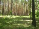 Заповедная зона, Еловщина
