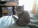 Это моя Киця