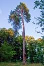 Здається, тут дерева своїми верхівками торкаються неба...