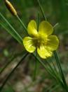 Лесной цветок 2.