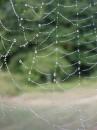 Ранкова роса на павутинці - знято в 17 серпня 2009 року.
