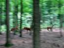 Несподівано перед автором знімка пробігало стадо тварин, яких вдалося зафіксувати на фотокамеру