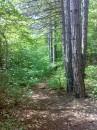Попадая в лес чувствуешь неземной рай. Свежесть листвы, пение птиц заставляет забыть о цивилизации. А  идя по тропе, понимаешь всю загадочность леса